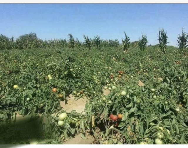 مزرعتك  في الريف المصري