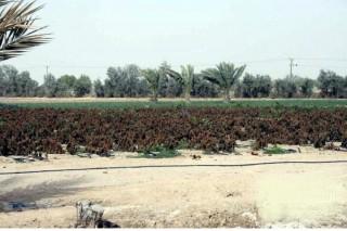 مزرعة مجهزة بسعر مميز بالوفرة