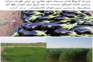 مزرعه  5 فدان