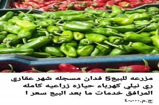 مزرعه  5 فدان للبيع