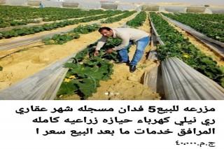 ارض زراعيه للبيع بطريق الفيوم