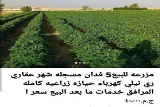 مزرعة مثمره للبيع